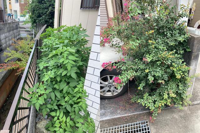 広島市安佐南区でお庭のサルスベリ・雑草の伐採